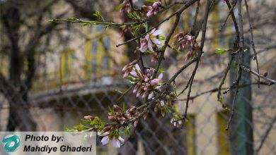 Photo of شکوفه های امید در بهار قرنطینه ای ایران