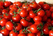 Photo of قیمت گوجه فرنگی، شکست