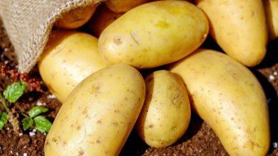 Photo of صادرات سیبزمینی آزاد شد