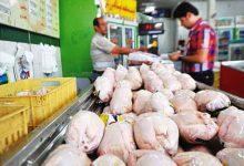 Photo of کاهش قیمت مرغ تا ۱۱ روز آینده