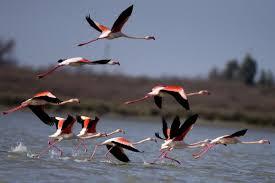 Photo of آنفولانزا فوق حاد، دلیل تلف شدن پرندگان نبوده است