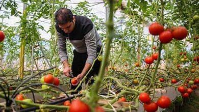 Photo of تخصیص ۴۰ میلیارد تومان برای شهرکهای گلخانه ای ملایر